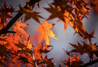 autumn-leaves-1415541_1920