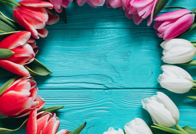 pink-tulips-flower-frame-spring-flowers-white-tulips-blue-wooden-background