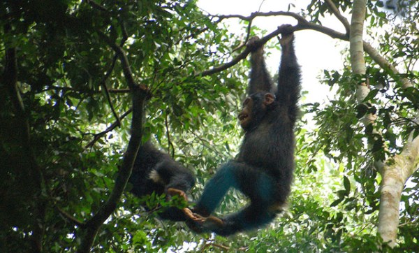 Джунгли в Африке