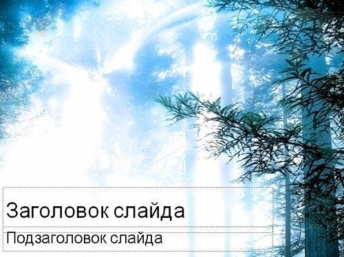 Яркий свет в лесу