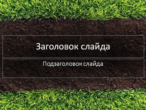 Трава и газон