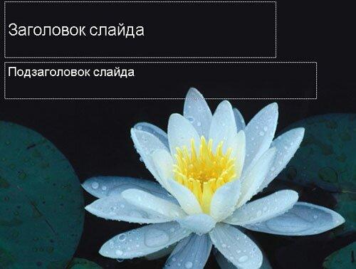 Цветущий лотос