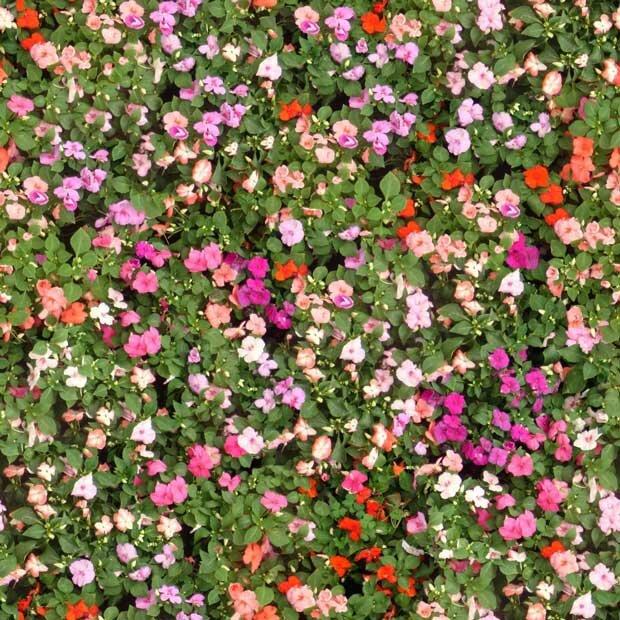 Фоны для презентаций - Поляна цветов 7