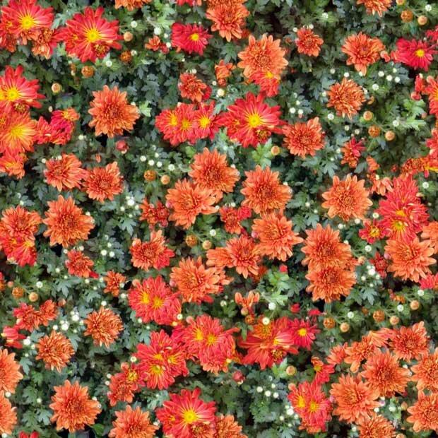 Фоны для презентаций - Поляна цветов 9