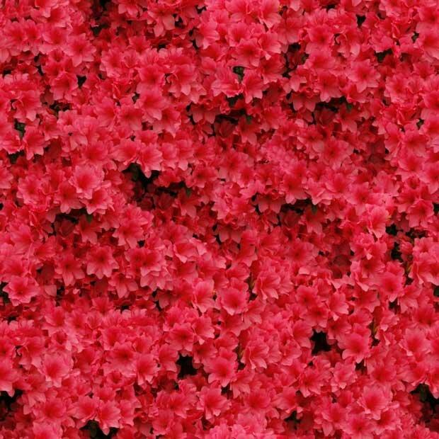Фоны для презентаций - Поляна цветов 13