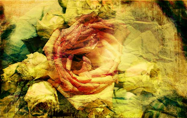 Фоны для презентаций - Розы 7