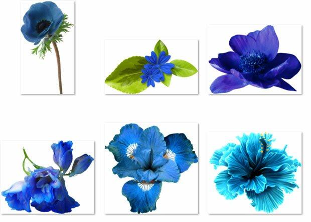 Синие незабудки