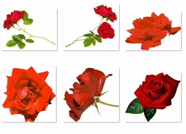 Кровавые розы