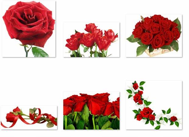 Изображения роз