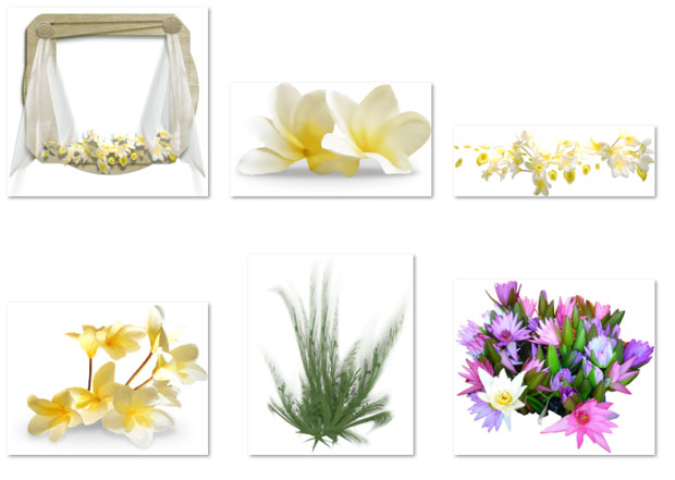 Коллекция цветов