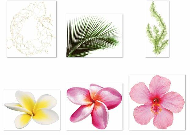 Тропические растения и цветы