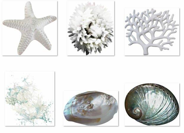 Морская звезда и раковины