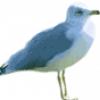 Дикие и домашние птицы - презентация