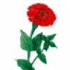 Цветы - презентация