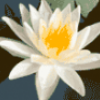 Цветы экзотические - презентация