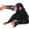 Приматы животные