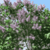Части растения - презентация