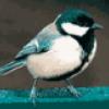 Пение птиц - презентация