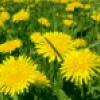 Желтый цвет - презентация