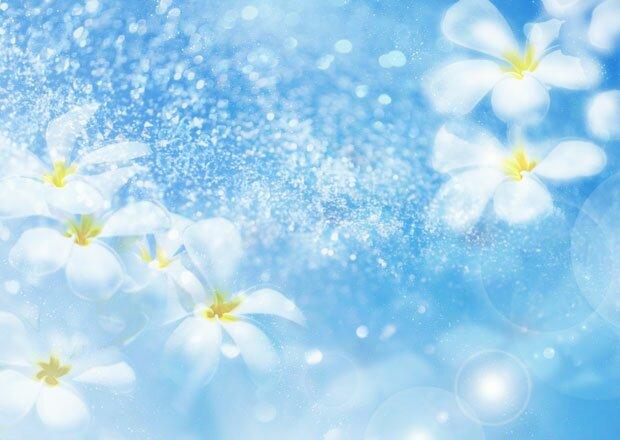 Цветы и лепестки