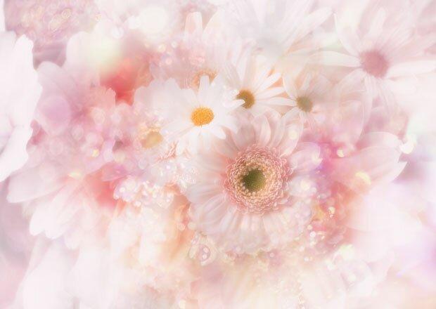 Красивые цветы - фон