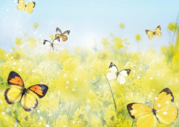 Бабочки с цветами