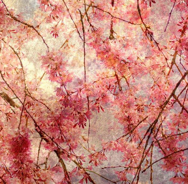 Цветки на дереве