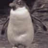 Пингвины и их виды - презентация