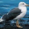 Птицы средней полосы - презентация