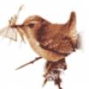 Строение и развитие птиц - презентация