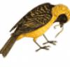 Птицы в России - презентация