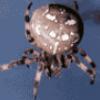 Виды пауков - презентация