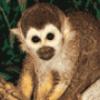 Отряд приматы - презентация