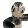 Рептилии змеи - презентация