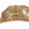 Леопард хищник - презентация