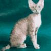 Породы кошек - презентация