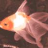 Рыбы в аквариуме - презентация
