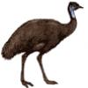 Животные Австралии - презентация