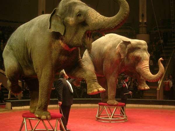 Цирковые слоны