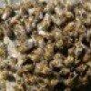 Пчелы на пасеке