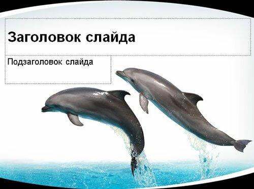 Трюки дельфинов