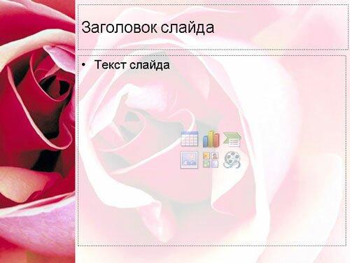 Шаблон презентации Красная роза
