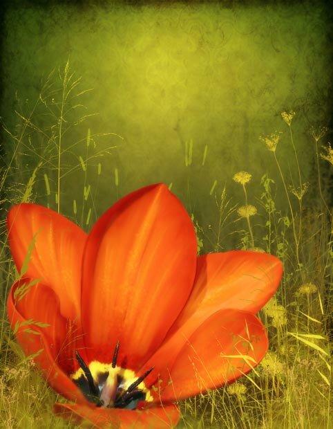 Фоны для презентаций - Волшебные цветы 2