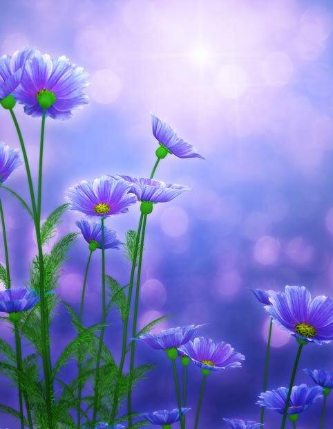 Фоны для презентаций - Волшебные цветы 4