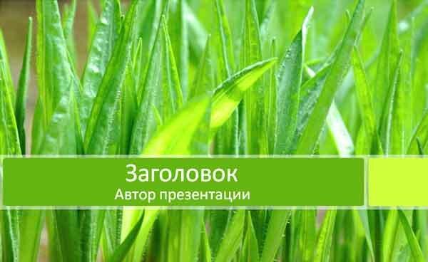 Шаблон презентации Зеленая трава - титул