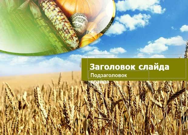 Шаблон презентации Урожай