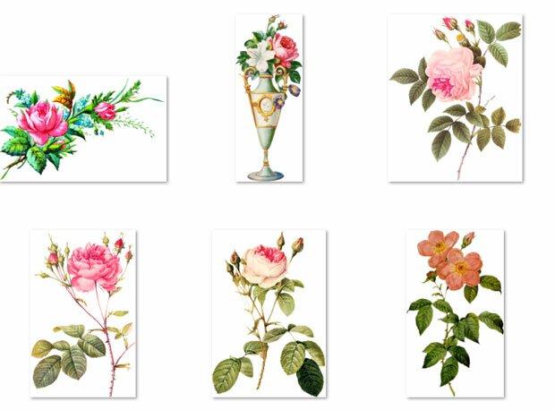 Собрание цветов