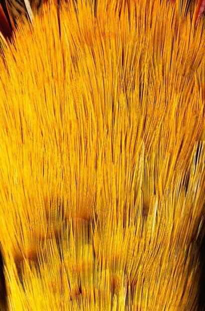 Желтые перья