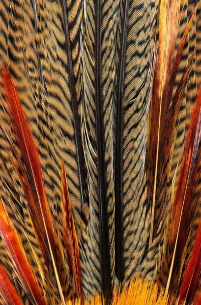 Цветные перья птицы