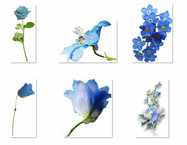 Цветы в синем исполнении